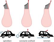 Anatomie en fysiologie van het evenwichtsorgaan en het vestibulaire netwerk