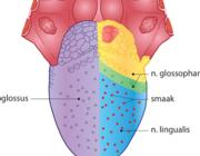 Het nek-tongsyndroom