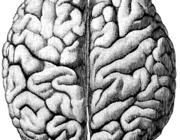 Van zenuw- en zielsziekten naar neuropsychiatrie en gedragsneurologie