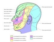 Trigeminale autonome cefalalgieën